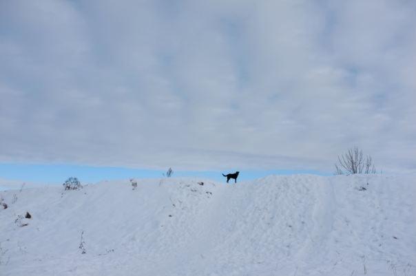 hedy bach photography ~ FUJI x100 ~ dog walk ~ 1