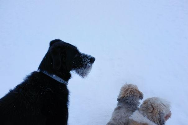 hedy bach photography ~ FUJI x100 ~ Juno black dog ~ 2