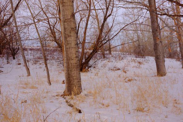 hedy bach photography ~ FUJI x100 ~ Calgary woods ~ 2