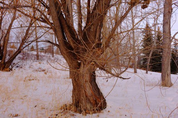 hedy bach photography ~ FUJI x100 ~ Calgary woods ~ 3