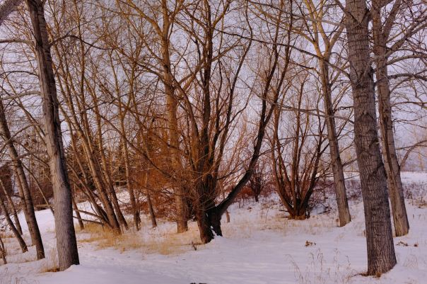 hedy bach photography ~ FUJI x100 ~ Calgary woods ~ 6
