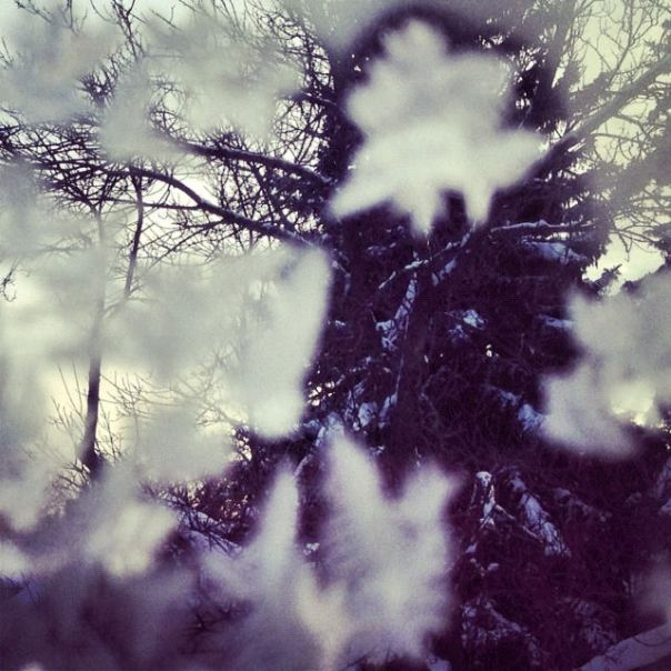 instagram ~ hedy bach ~ mobile photography ~ frost ~ 3