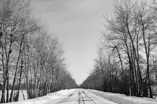 hedy bach photography ~  alberta spaces ~ south side road ~ 1