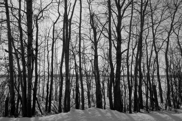 hedy bach photography ~  alberta spaces ~ south side road ~ 3