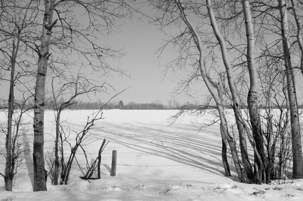 hedy bach photography ~  alberta spaces ~ south side road ~ 8