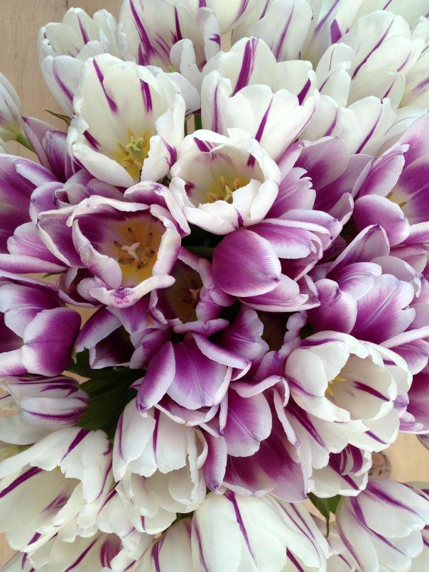 instragram hedy bach ~ spring flowers ~ 1