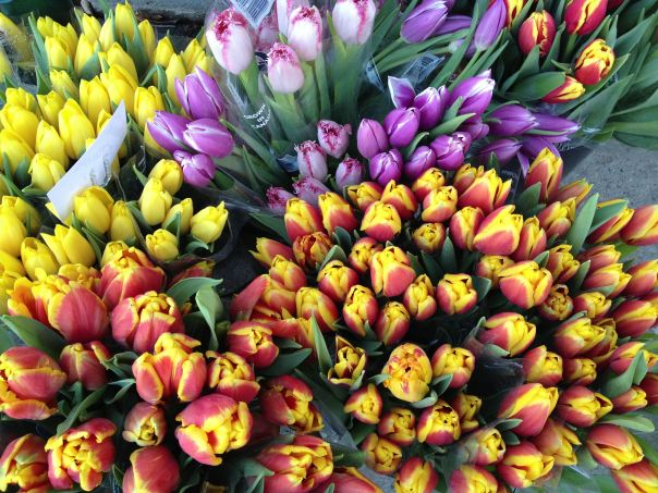 instragram hedy bach ~ spring flowers ~ 3