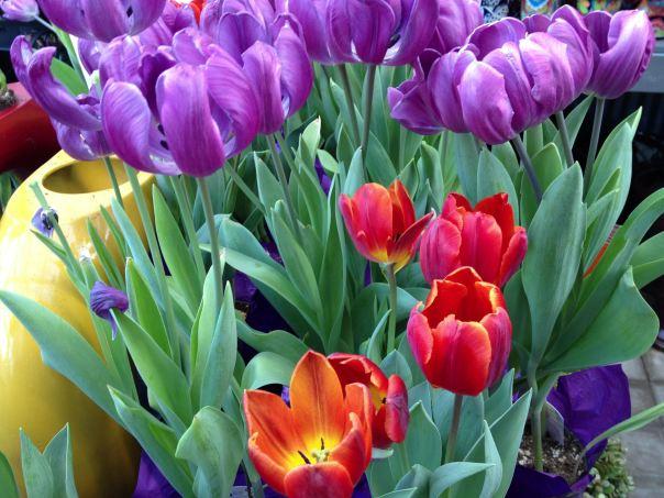 instragram hedy bach ~ spring flowers ~ 4