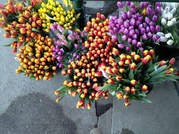 instragram hedy bach ~ spring flowers ~ 6