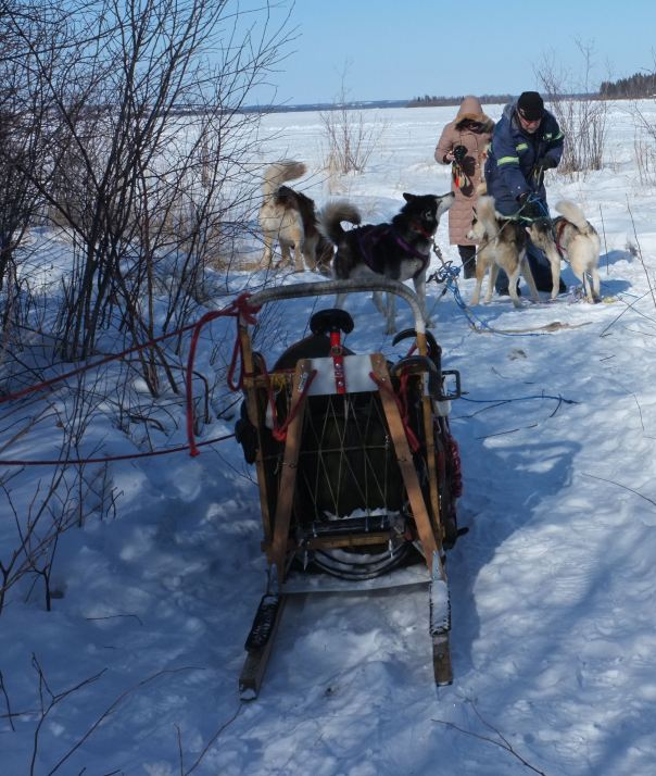 hedy bach photography ~ lumix ~ yellowknife ~ mushing ~ 12