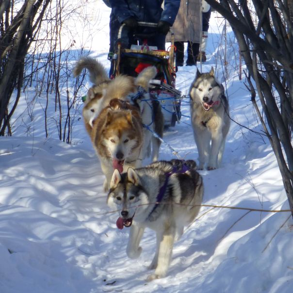 hedy bach photography ~ lumix ~ yellowknife ~ mushing ~ 8