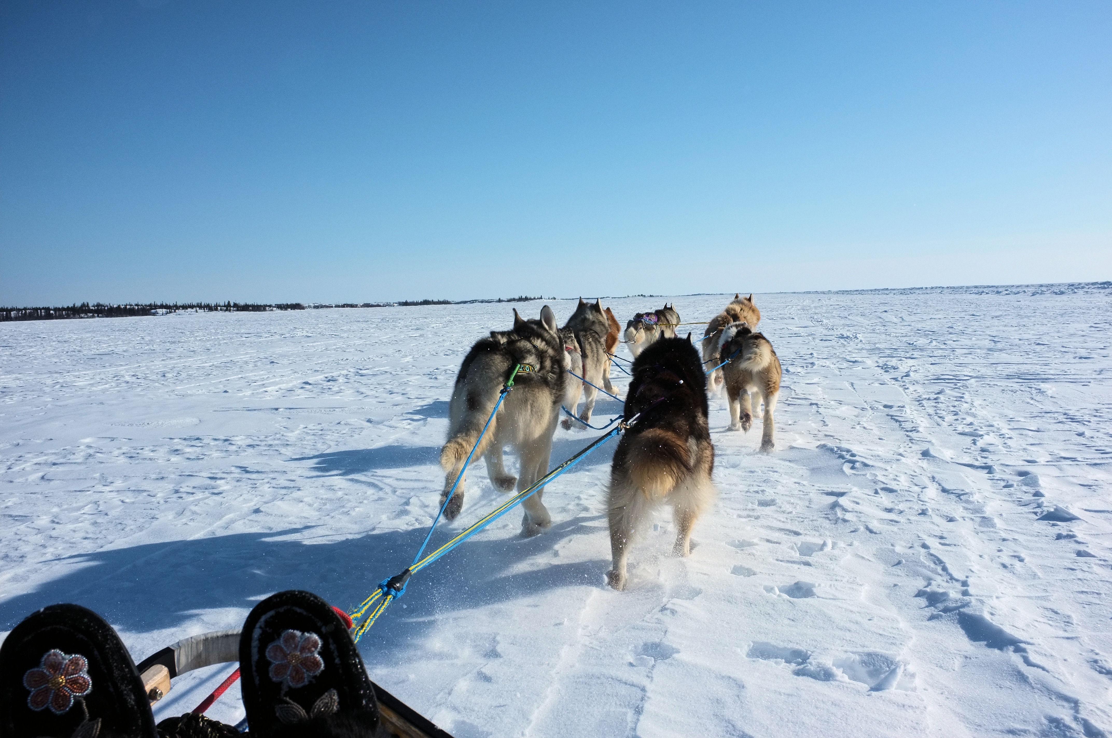 sled dog racing sloppybuddhist
