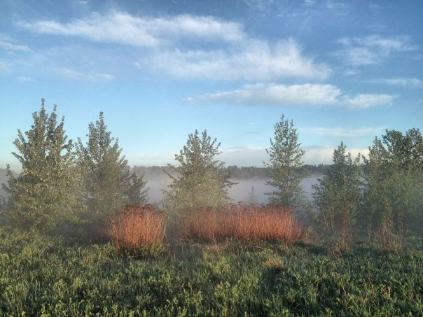 hedy bach photography ~ edmonton mist. ~ 1