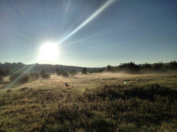 hedy bach photography ~ edmonton mist. ~ 3