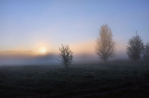 hedy bach photography ~ edmonton mist. ~ 4
