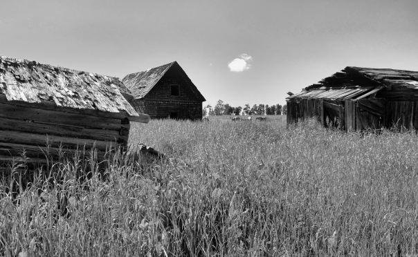 hedy bach photography ~ Sloppy Buddhist ~ Alberta spaces barn & horses b&w ~ 4