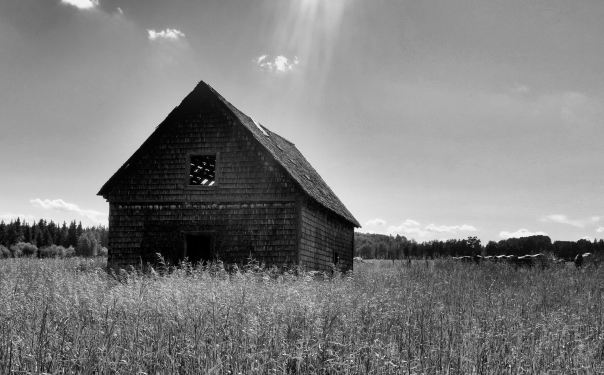 hedy bach photography ~ Sloppy Buddhist ~ Alberta spaces barn & horses b&w ~ 5