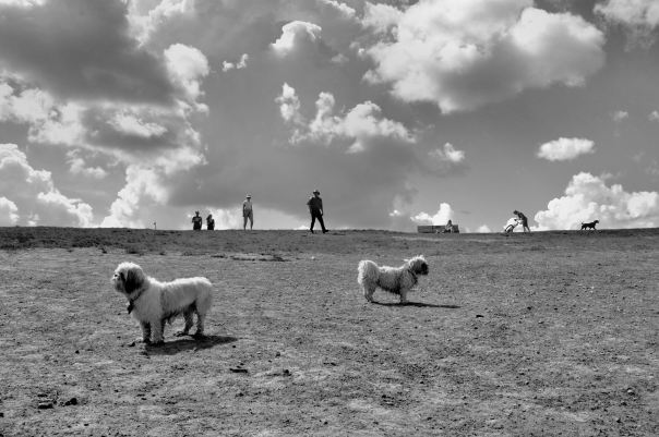 hedy bach photography ~ Sloppy Buddhist ~ fijix100 ~ Tpark ~ 3