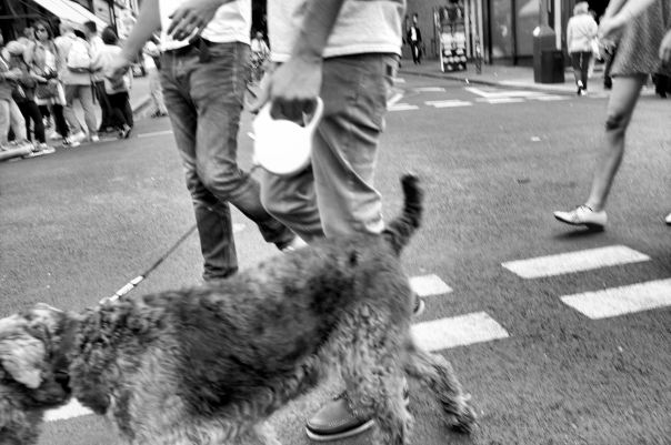 hedy bach photography ~ Fijifilm X100 ~ London ~ dog ~ 2