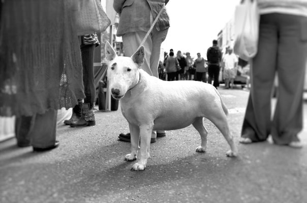 hedy bach photography ~ Fijifilm X100 ~ London ~ dog