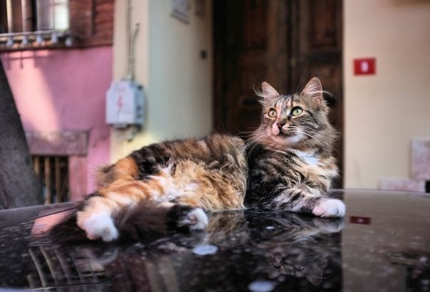 hedy bach photography ~  FujiFilm X100 ~ Turkish cats ~ Istanbul ~ 3