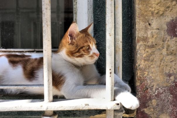hedy bach photography ~  FujiFilm X100 ~ Turkish cats ~ Istanbul ~ 7