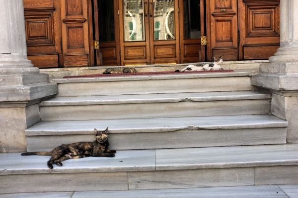 hedy bach photography ~  FujiFilm X100 ~ Turkish cats ~ Istanbul ~ 8