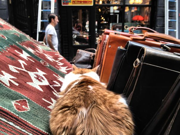 hedy bach photography ~  mobilephotography ~ Turkish cats ~ Istanbul ~ 2