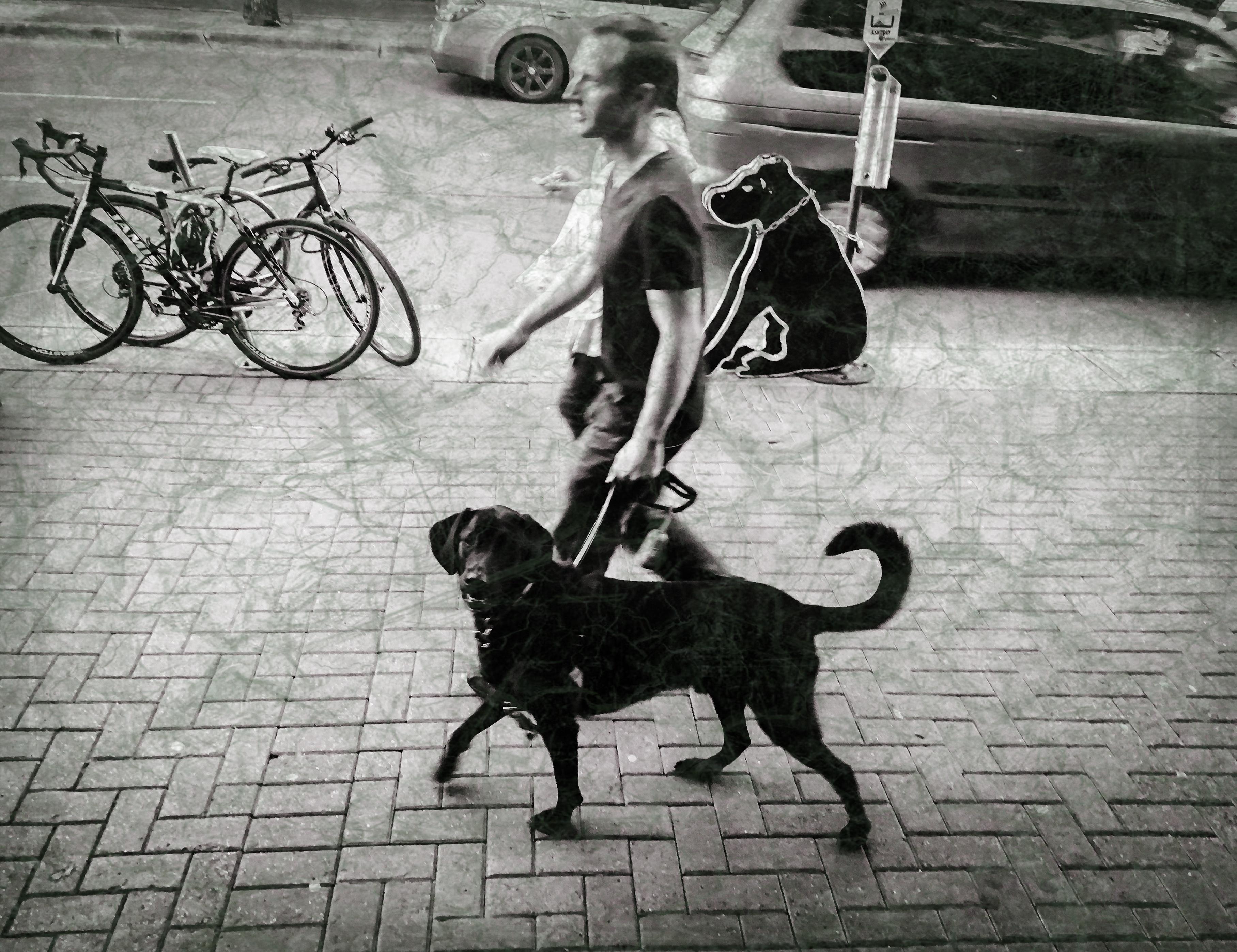 Black dog ~ worn 2