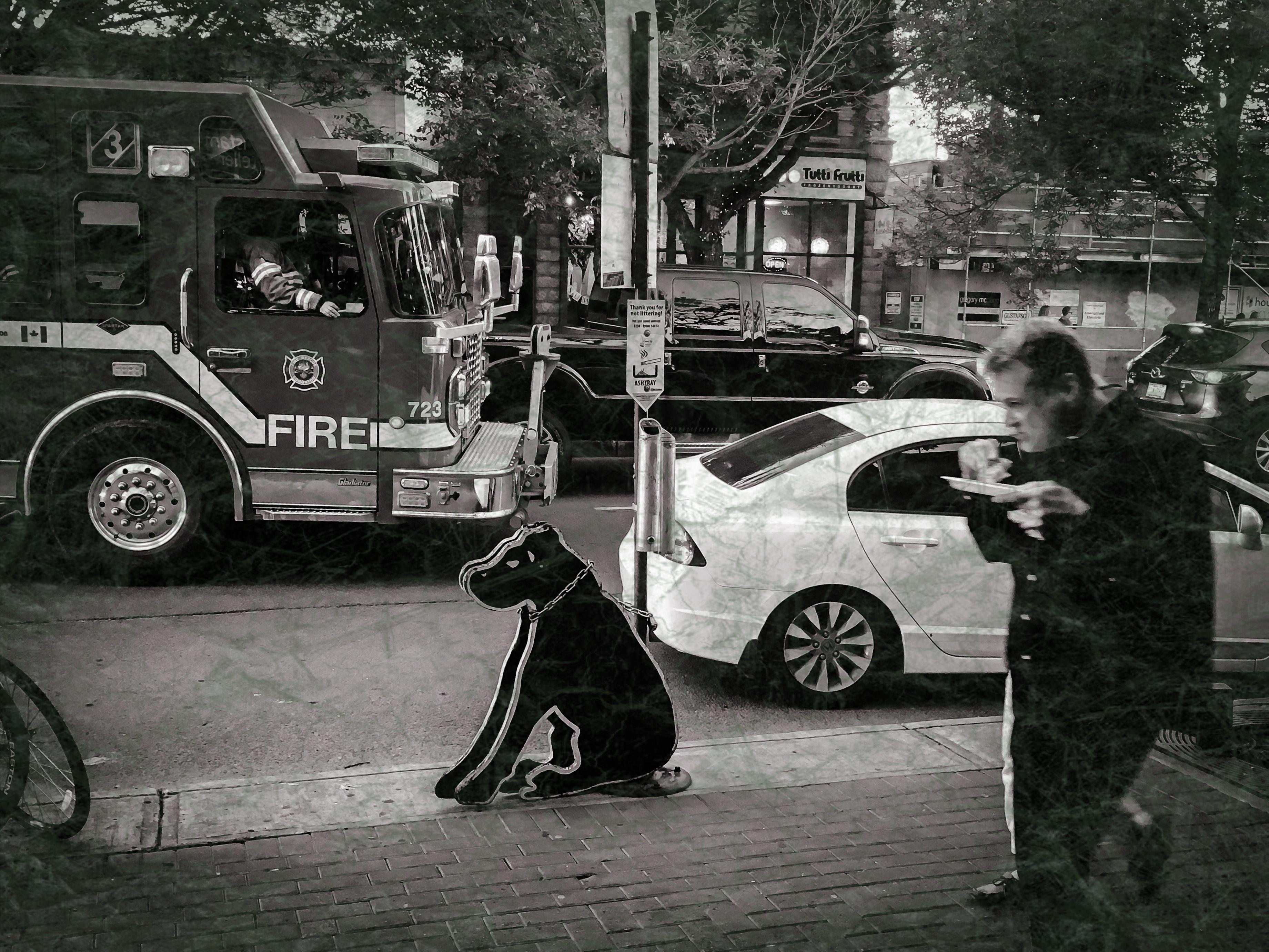 Black Dog ~ worn ~ 7