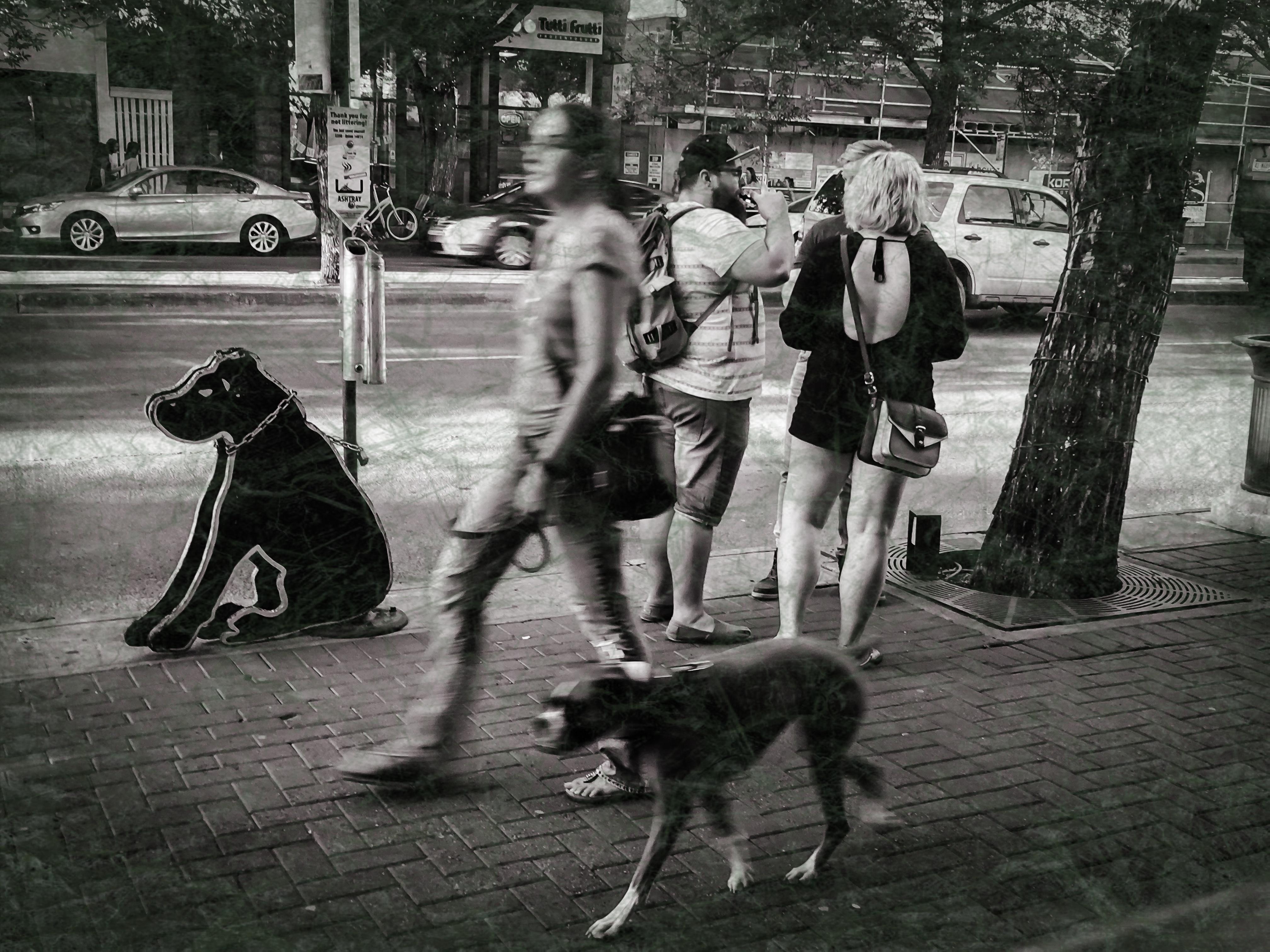 Black Dog ~ worn ~ 8