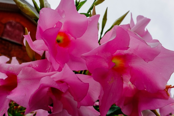 Hedy Bach Photography - flowers - TO - 5