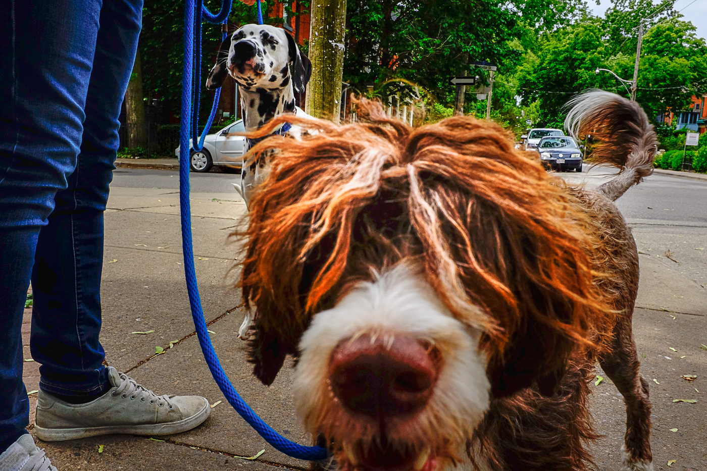 Hedy Bach Photography - TO dog - 6