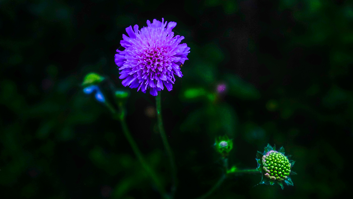 Hedy Bach Photography -TP clover -3