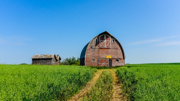 Hedy Bach Photography - SASK - red barn_