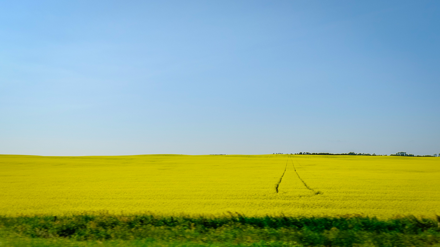 Hedy Bach Photography - SASK - yellow field and tracks