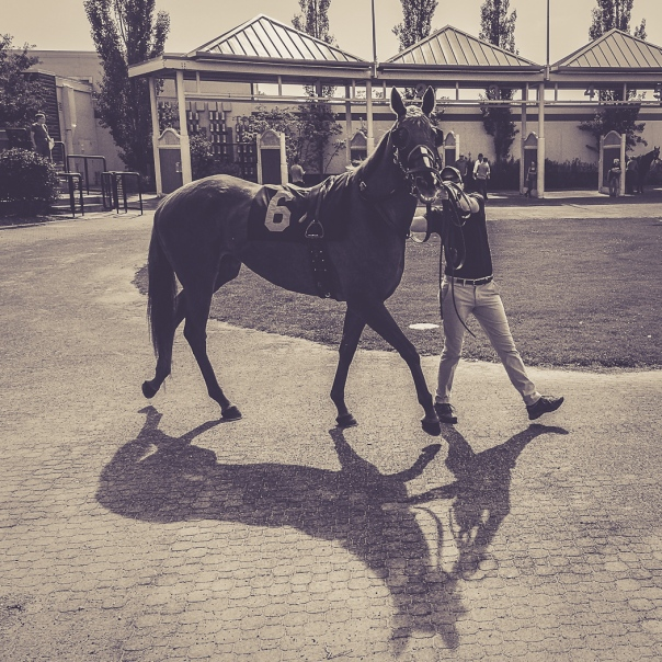 Hedy Bach Photography - horse races - 5