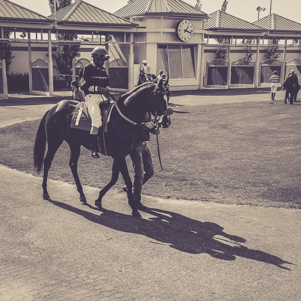Hedy Bach Photography - horse races - 6