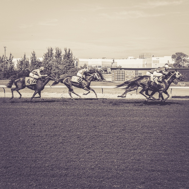 Hedy Bach Photography - horse races - 8