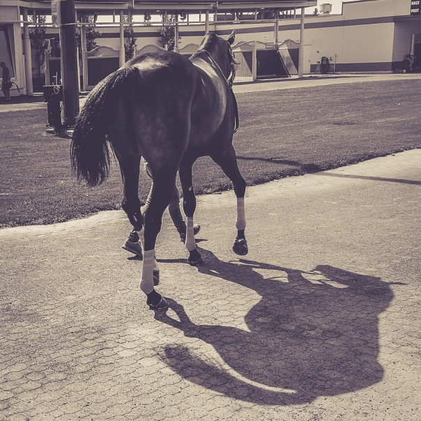 Hedy Bach Photography - horse races - 9