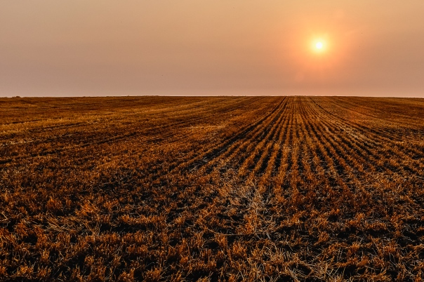 Hedy Bach Photography - u of a farm - sundown - 1