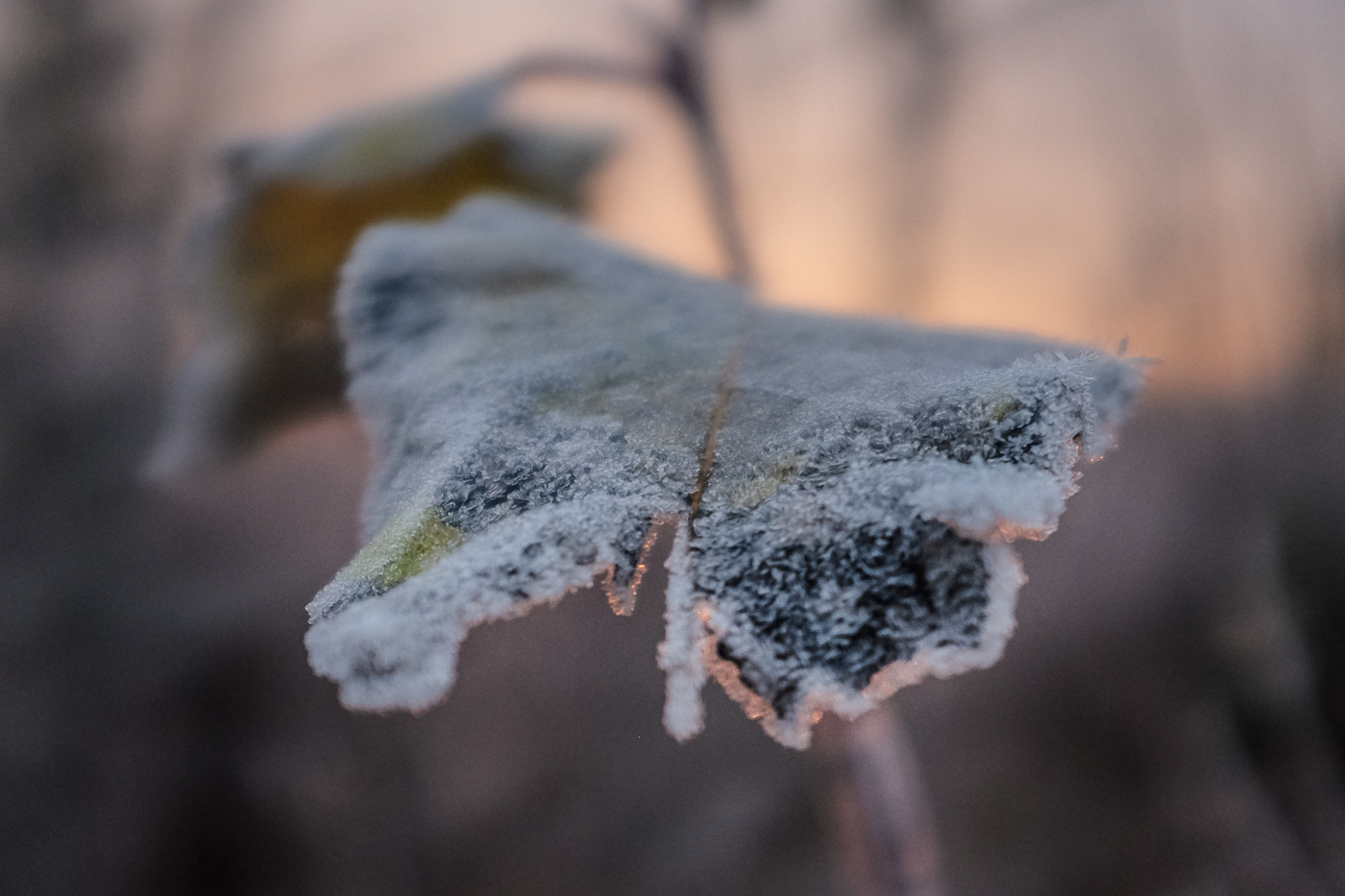 Hedy Bach Photography - frosty morning - 1