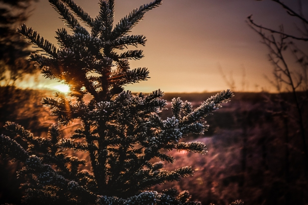 Hedy Bach Photography - frosty morning - 2