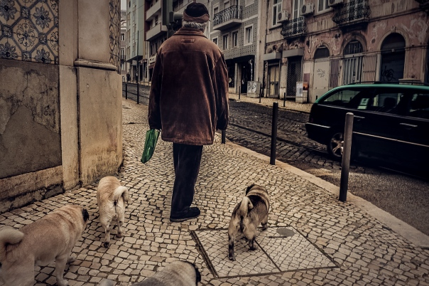Hedy Bach Photography - Lisbon pugs - 4