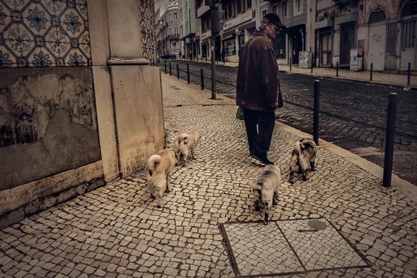 Hedy Bach Photography - Lisbon pugs - 5