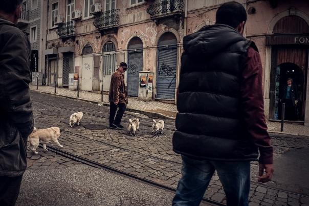 Hedy Bach Photography - Lisbon pugs - 6