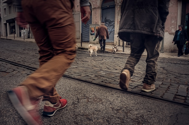 Hedy Bach Photography - Lisbon pugs - 7