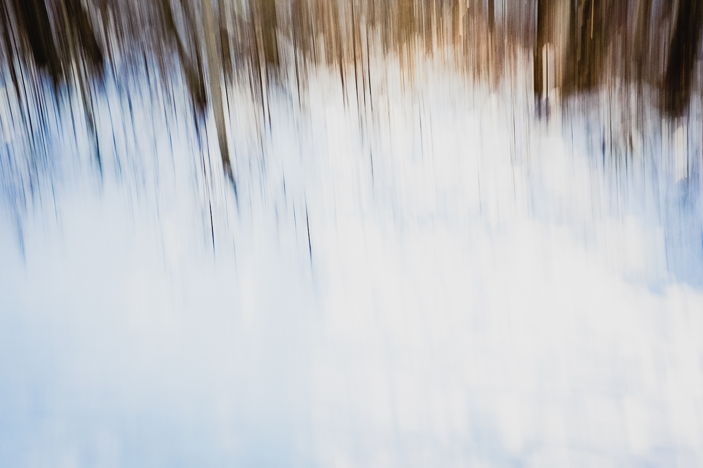 hedy bach photography - conceptual trees movement - 3