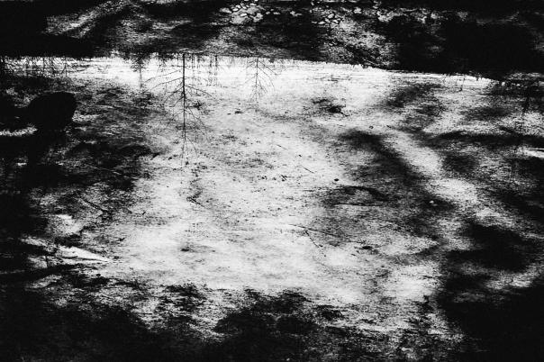 hb images - woods b-w - 2