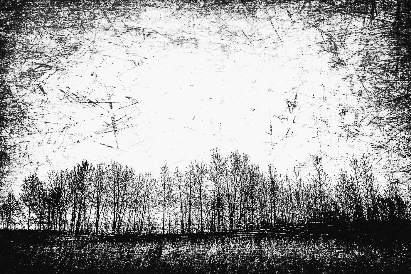 hb images - woods b-w - 6